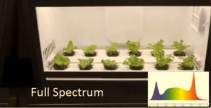 Grow Lights - HD Grow Lights