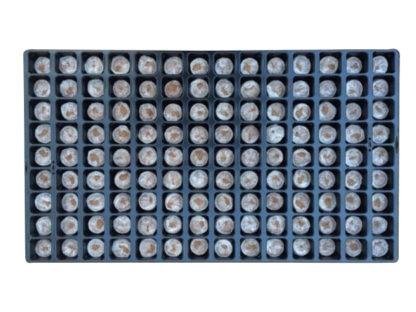 HDGrowLights - jiffy-tray-1 - 60x120mm - 32