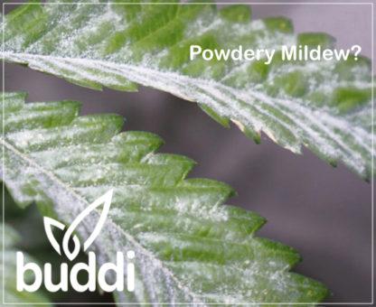 HdGrowLights - buddi Pest Control Spray Powdery Mildew
